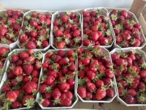 GF 18 Erdbeeren
